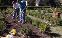 Image of shrubs and men working the dirt